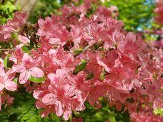 Jardins em tons de cor-de-rosa
