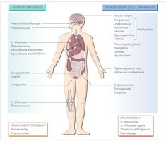 Infections in immunocompromised patients
