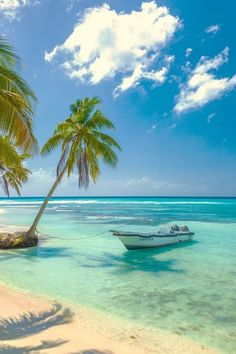 Tropical Beaches With Palm Trees Dream Vacations, Vacation Spots, Places To Travel, Places To Visit, Travel Destinations, The Beach, Summer Beach, Ocean Beach, Photos Voyages