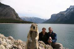 funny-animal-photobombs-1__880