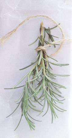 rosemary herb bundle