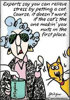 :) maxine - Maxine Humor - Maxine Humor meme - - maxine Maxine Humor Maxine Humor meme maxine The post maxine appeared first on Gag Dad. The post :) maxine appeared first on Gag Dad. Crazy Cat Lady, Crazy Cats, Just For Laughs, Just For You, Cartoon Meme, Cat Cartoons, Cartoon Cats, Stress Relief, Anxiety Relief