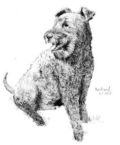 Kerry blue terrier illustration.