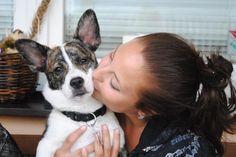 forever together Boston Terrier, French Bulldog, Corgi, Animals, Boston Terriers, Corgis, Animales, Animaux, French Bulldog Shedding