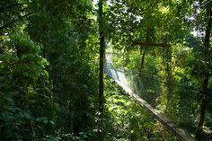 Sky Bridge Jungle Safari, Sarawak.