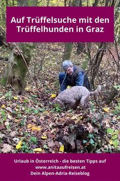 Vertrüffelt in Graz: Beim Citytrip nach Graz kannst du nicht nur am Trüffelmarkt oder beim Trüffeldinner Köstlichkeiten aus der Erde probieren, sondern auch mit den Trüffelhunden im Wald nach den edlen Knollen suchen. Das Sightseeing-Erlebnis für die Steiermark. Alles darüber erfährst du in diesem Blogbeitrag, plus Tipps für Feinschmecker und Trüffelliebhaber. Bergen, Tricks, Hiking Boots, Restaurants, Graz, Travel Report, Tours, Travel Inspiration, Travel Advice