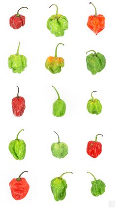 HABANERO - Typology by Diana Zlatanovski: HABANERO  Archaeological analysis of pepper remains from a cave in Mexico revealed humans were harvesting wild habanero chili peppers around 8,000 years ago. 2,000 years ater, the pepper was being cultivated domestically and was spreading geographically. In 1493, members of Christopher Columbus' crew brought the first chili peppers to Spain.  #Photography #Habanero #Typology