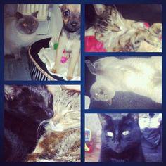 Cat love ( or hoarding )