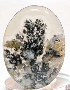 Black and White Dendrites Texas Plume Agate Moss Agate Cabochon