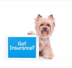 Is Pet Insurance Worth it? – About Morkies!