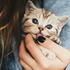 Let see pictures of cat bath/wet cat, Cats are cute and cuddly animals. The independent nature of cats makes them an ideal choice as pets. Cute Kittens, Cats And Kittens, Fluffy Kittens, Kittens Meowing, Siamese Cats, Cute Baby Animals, Animals And Pets, Funny Animals, Funny Cats