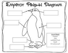 Rockhopper Penguin Printout- EnchantedLearning.com