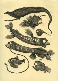 Deep sea fishes ~ Like some kind of macabre ghost print the line drawings on to Boa's Dress?