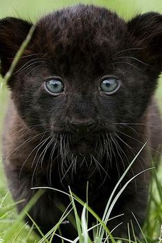 zzzuper cute!!!