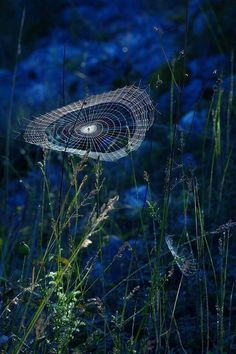 Brownies, Midnight Garden, Image Photography, Shades Of Blue, Nature Photos, Faeries, Beautiful Homes, Birds, Fish