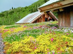 Green roof meadow - could be over bulk of structure with some personal units popping up like tiny houses on a meadow.