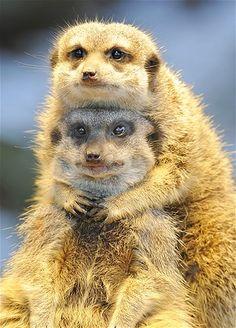 Afbeelding: Dikke dierenliefde (© Rex Features)