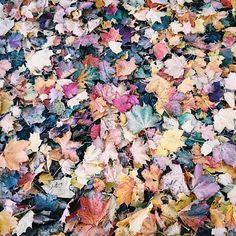 Beautiful Autumn carpet just outside my door this morning ..love natures colours