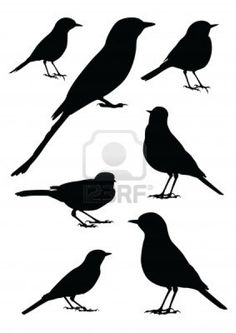 Birds Silhouette - 7 different vector illustrations Stock Photo - 13625765
