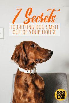 Pin By Dog Lovers Hub On Dog Lovers Hub Dog Smells Dog Pee