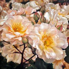 Lyn Diefenbach — Timeless Grace (750x750)