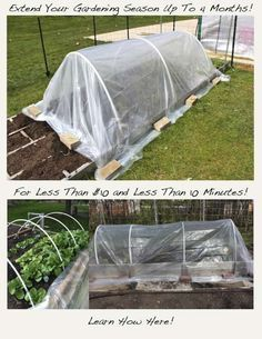 How to Extend Your Gardening Season Up To 4 Months Longer For Less Than Ten Dollars!Learn How to Extend Your Gardening Season Up To 4 Months Longer For Less Than Ten Dollars! Raised Garden Beds, Raised Beds, Organic Gardening, Gardening Tips, Camping Bbq, Diy Greenhouse, Homemade Greenhouse, Greenhouse Wedding, Dream Garden