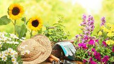 The Garden ~ Words From Heather  http://www.pendrifts.com/BoldStrokes/2015/06/20/the-garden/