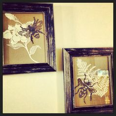 Framed insect paper cuttings #insects #paper cutting