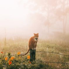 Charlie in the early morning fog...✨ Cute little tabby cat by the fence