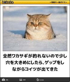 Animals And Pets, Cute Animals, Cat Boarding, Good Jokes, Cat Life, Funny Comics, Cool Cats, The More You Know, Laughter