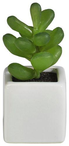 Sukkulenten eignen sich super zur Dekoration. Ob Minitöpfe oder Löcher in Ziegelsteinen, Sukkulenten wachsen fast überall und sind somit sehr pflegeleicht. Bringen Sie doch ein bisschen Grün in Ihr Heim.