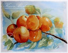 Wednesday Watercolors - Apricots on three different Arches watercolor papers