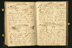 Constantine S. Rafinesque's list of specimens collected during a field trip in 1818. He visited various locations in Pennsylvania, Kentucky, New York, and the District of Columbia.