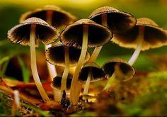 Lights of Inspiration: Mushrooms