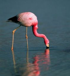 Flamingos.  Imagine that.  A pink bird!