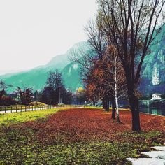 #campolongo  #campolongosulbrenta #brenta  #lungobrenta  #passeggiata #autunno #autumn #autumnleaves #igersvicenza #igersitaly by campolongosulbrenta