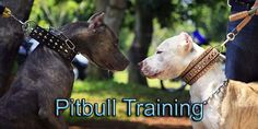 Pitbull Puppies For Sale In Alaska. This Pitbull Breeder Directory lists Pitbull Kennels located in Alaska where you can find Pitbull puppies. Pitbull Breeders, Pitbull Kennels, Pitbull Puppies For Sale, Pitbull Information, Pitbull Facts, Funny Pitbull, Pitbull Training, Web Design Examples, Pet Dogs