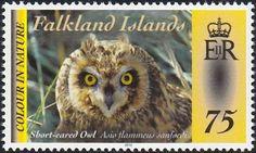 Stamp: Falkland Short-eared Owl (Asio flammeus sanfordi) (Falkland Islands) (Flora & Fauna) Mi:FK 1194,Sn:FK 1080a,Sg:FK 1245