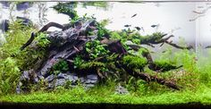 Layout 86 - Stuart Worrall - Tropica Aquarium Plants