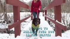 Want to protect your dog from ice, snow and cold temperatures? Here's our advice on dog-walking tools, plus dog clothes like jackets, booties and sweaters.