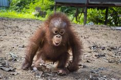 BUDI - Competition | International Animal Rescue