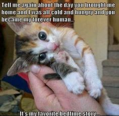 How sweet is that? Does it remind you of the first day that you spent with your forever kitty?