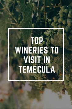 Looking for the best place to go wine tasting in Southern California? Located just outside San Diego, Temecula is the place to be. Check out my list of top wineries in Temecula before your next visit! #temecula #winetasting