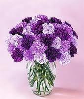 purple carnations - Flower#3
