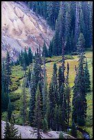 Godfrey Glen Meadow and ash cliffs. Crater Lake National Park ( color)