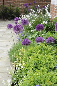 A smart town front garden in Wimbledon Village designed by Arthur Road Landscapes Wimbledon Village, Tunbridge Wells, Allium, Garden Inspiration, Garden Ideas, Garden Planning, Pathways, Spring Flowers, Perennials