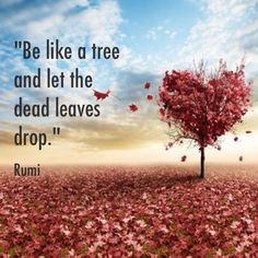 "jacobnordby:""Be like a tree and let the dead leaves drop."" Rumi Yes!!!!! The trees are showing us the beauty of letting dead things go."