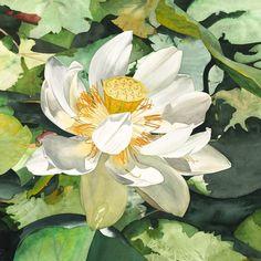 7b06befe517d861cb3d92953af43b6bd--floral-watercolor-watercolour-flowers.jpg (736×736)