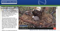 For nature lovers! Live Stream of a Bald Eagle couple who built their nest on a college campus and their baby Eaglet. Watch feedings, nest attacks, the growing baby, etc.. all live!