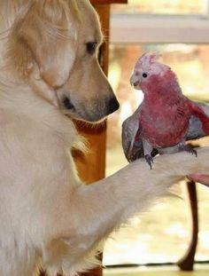 Лилия Горбачева – Google+ Liebe und Respekt auch unter den Tieren!